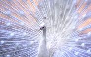 Beautifulbirds15