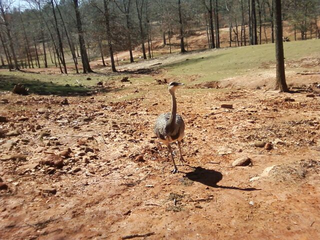 File:Emu.jpg