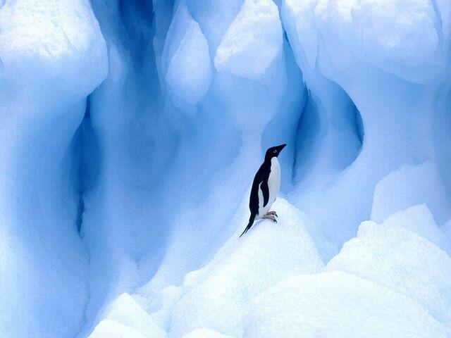 File:Lonely Penguin.jpg