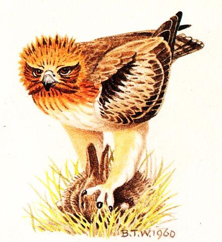 File:Bird paint .IMG.jpg