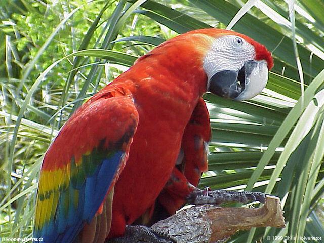 File:Macaw.jpg