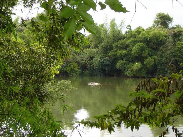 File:Ranganathitu+bird+sanctuary-5773.jpg