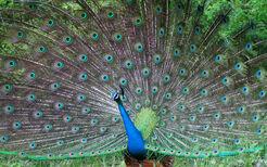 Beautifulbirds11
