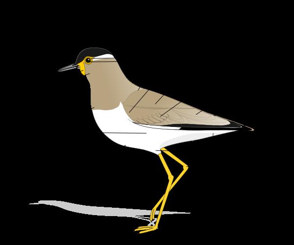 Birdmorphology