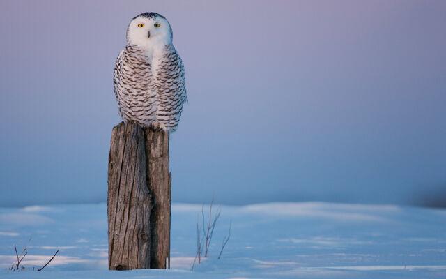 File:Birdsofprey14.jpg