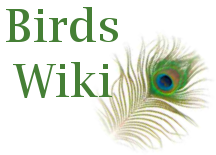 File:Wiki.png