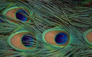 Beautifulbirds13