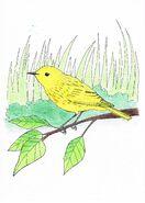 Yellow warbler drawing