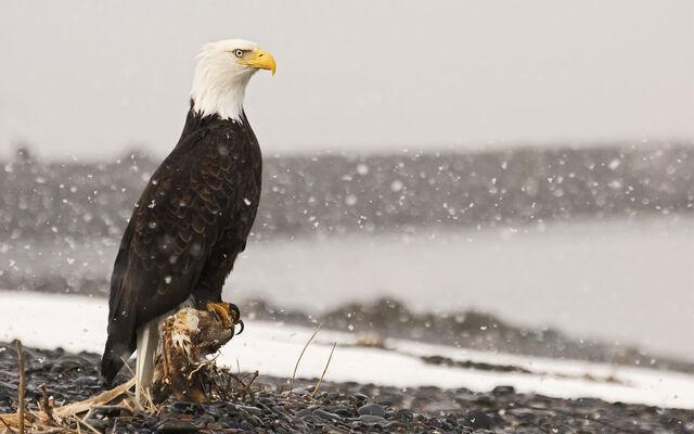 File:Birdsofprey5.jpg