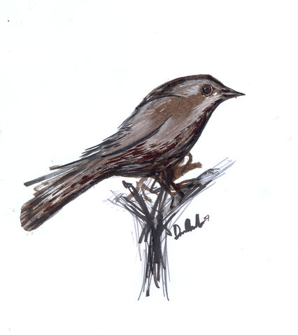 File:Nightingale drawing-2134.jpg