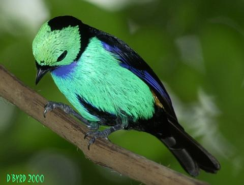 File:Green Bird.jpg