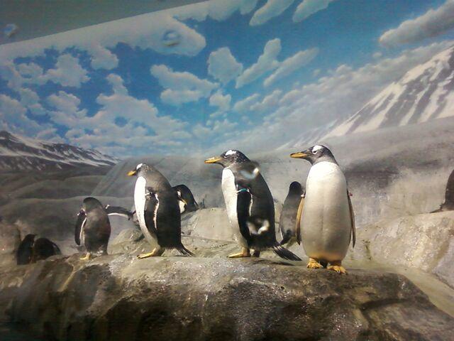File:Penguins 04.jpg