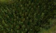 Forestnatural
