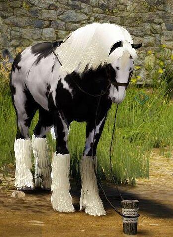 File:Explorer horse resting.jpg