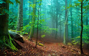 Beautiful-forest-43250