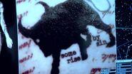 Blindspotbull