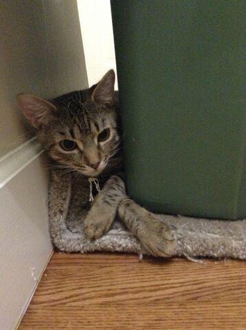 File:Sofi finds a hiding place.JPG