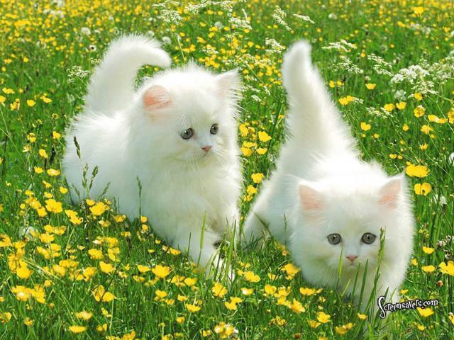 File:Cute cats yas.jpeg