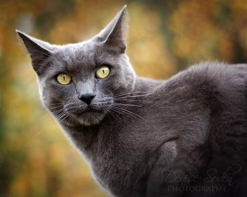 File:Cat 7.jpg