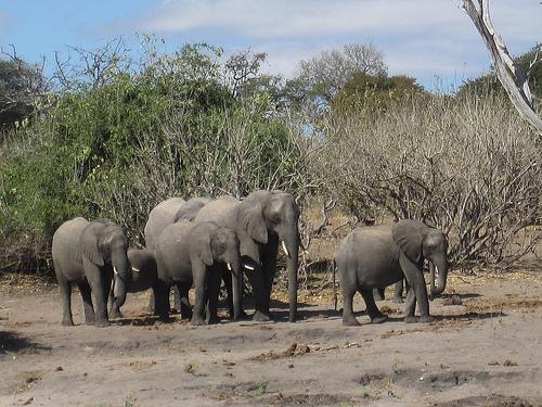 File:Victoria Falls Chobe 041.jpg