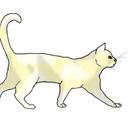 Lilyshine