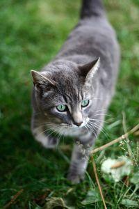 File:Cat-9260.jpg
