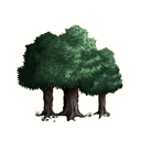 File:Darkwood Forest Logo.png