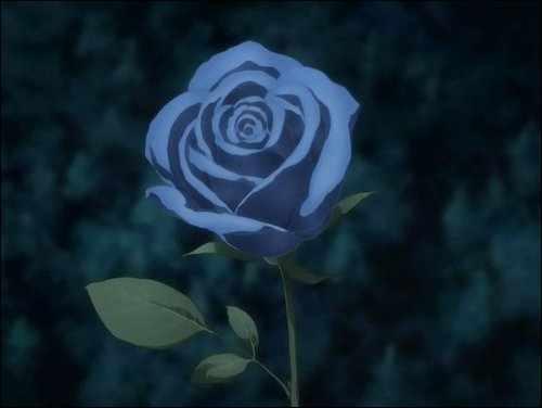File:Closer look at the blue rose..jpg
