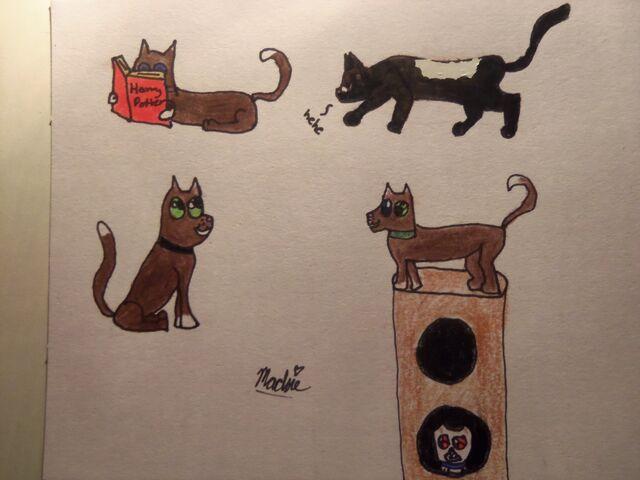 File:My kitties 004.JPG