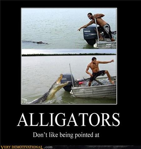 File:Alligators.jpg
