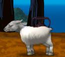 Angry Ewe
