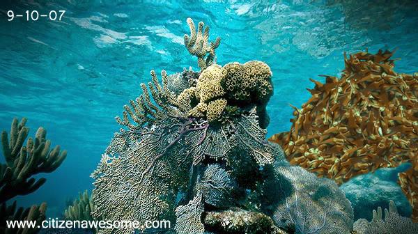 File:Sep reef.jpg