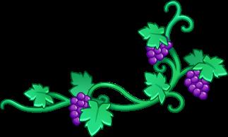 File:Grape vine.png