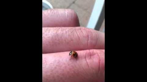 Ladybug documentary
