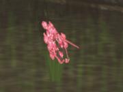 Flowers PickUp