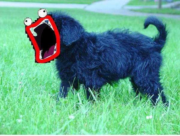 File:Dogg1.jpg