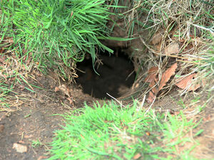 Rabbit hole2