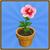 Hibiscusicon