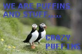 Crazy Puffins.