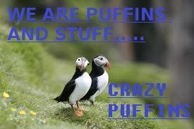File:Crazy Puffins..jpg
