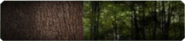 Tree Hugger Background BO