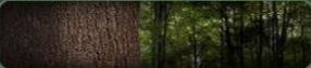 File:Tree Hugger Background BO.png