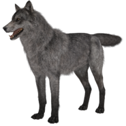 Wolf model 1 CoDG
