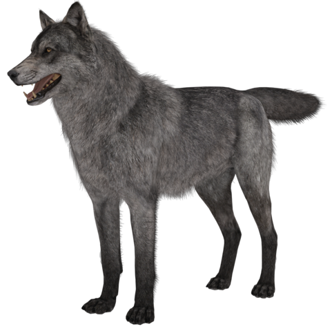 File:Wolf model 1 CoDG.png