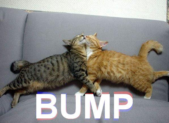 File:Catbump.jpg