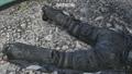 Kryptek Typhoon Camouflage dead Operator AW.png