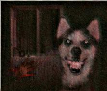 File:Sdog.jpg