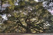 Ivy's Tree Pic 1