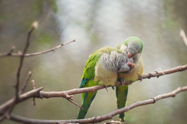 File:Love birds by toxic designs redux-d3ebfxs.jpg
