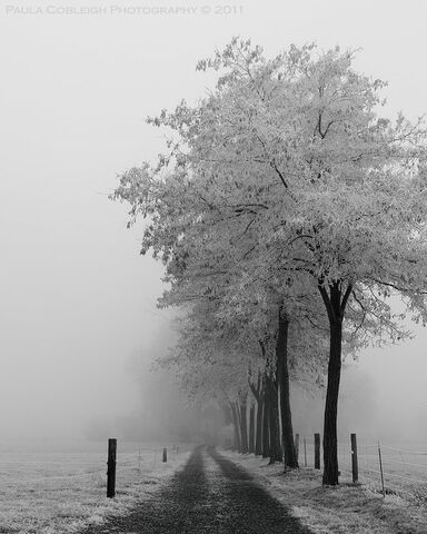 File:Into the fog by la vita a bella-d4m2sjg.jpg